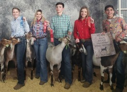 FFA students pose with prize animals at Tarrant County Junior Livestock Show